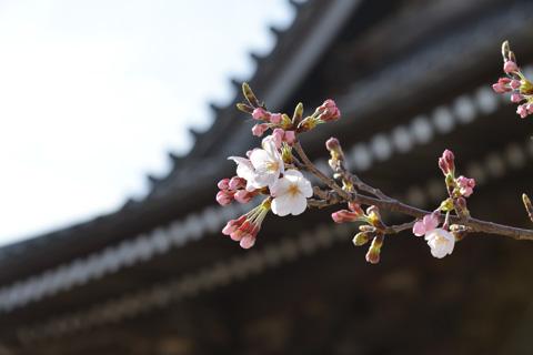 お寺の特徴的な屋根などを入れると,ちょっといい雰囲気に(^^)