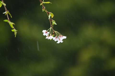 でも,雨がきつくなってきた~(涙)